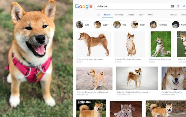 Google Lens目前已能识别10亿件以上的物品!只要拍摄宠物的照片就能识别品种!